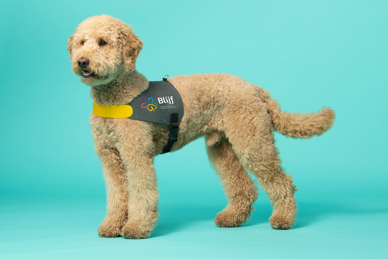 Huisbezoek contacthond